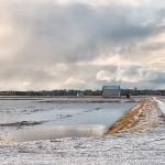 bogs winter